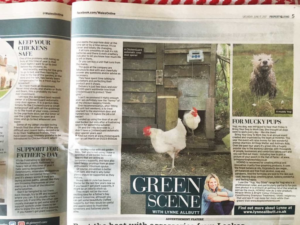 Article from Lynne Allbutt on her new ChickenGuard