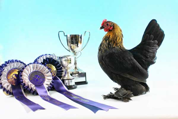 ChickenGuard retailer Chartley Chucks with Best of Breed