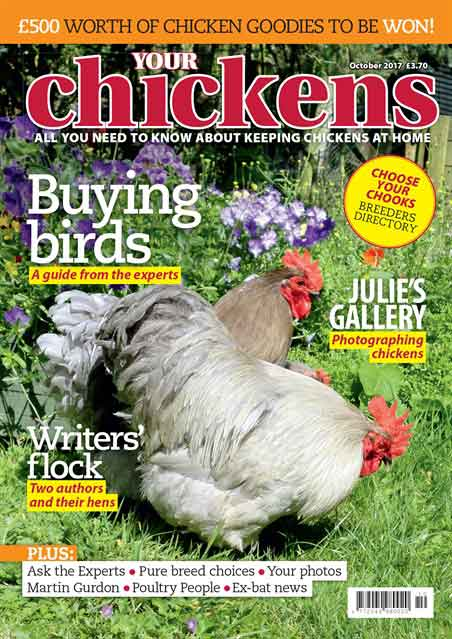 A Chicken Magazine subscription
