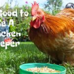 ChickenGuard, say it's good to be a chicken keeper