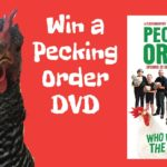 Pecking Order DVD Competition