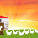 Chickens Return to Coop