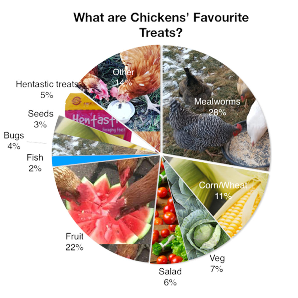 Chickens Favourite Treat Chart