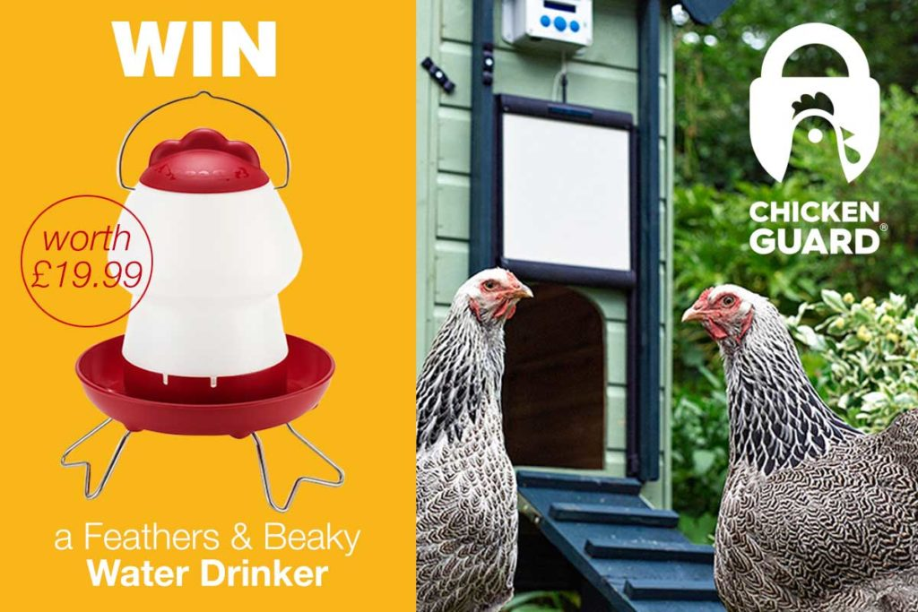 Feathers & Beaky Win a top-fill Drinker Competition