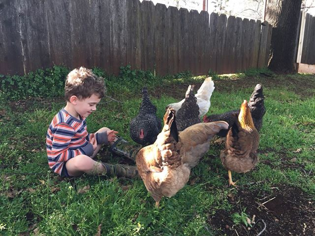 Sarah's Son and Chickens