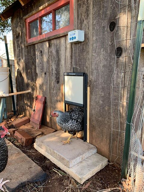The ChickenGuard allowed us to let our girls out every day